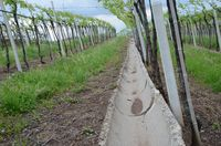 System of concrete drainage channels collects runoff from a vineyard resize